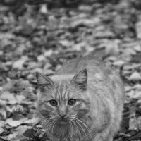 Уличный котик :: Алёна Нетесова