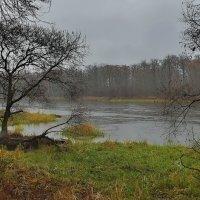 Осенний  дождик. :: Валера39 Василевский.