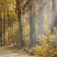 Про осень... :: Марина Назарова