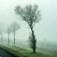 туман на дороге :: Лариса Батурова