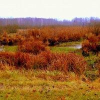 дождливый осенний день на болоте :: Александр Прокудин