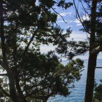 Черное море :: Надежда Шульц