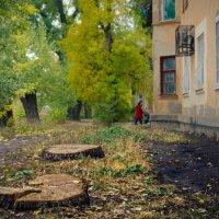 Пейзаж с пнями :: Константин Бобинский