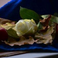 Белая роза :: Валерий Лазарев