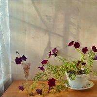 Пятый месяц в цвету... :: Нина Корешкова