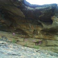 18. Цветы и камни. :: Александр
