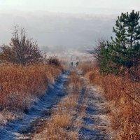 Осени этюды. Морозное утро нового дня... :: Александр Резуненко