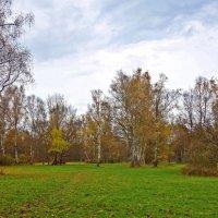 Осень тиха, безмятежна, легка... :: Galina Dzubina
