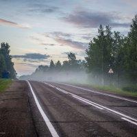 Дорога в туман :: Анна Меркулова