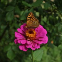 на цветке :: Ирина Жигулина