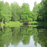 Зеленая тишина :: Дмитрий Никитин