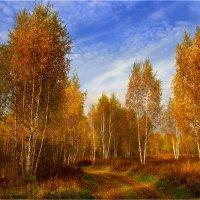 Золото осени :: Вячеслав Минаев