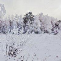 Морозное утро :: Анатолий Иргл