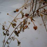 Первый снежок !!! :: Татьяна ❧