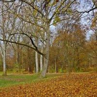 ...и задумчивый город засыпан опавшей листвой.... :: Galina Dzubina