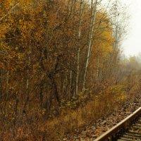 Рыжая осень ... :: Игорь Малахов