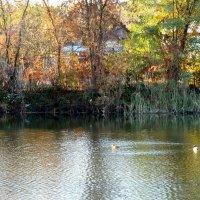 Осенний пруд в городе... :: Тамара (st.tamara)
