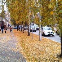 Осенние березы :: Serg