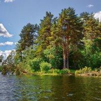 У лукоморья дуб зелёный... (Валдай. Озеро Петрово.) :: kolin marsh