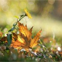 Осенняя романтика :: Алла Allasa