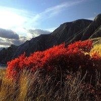 Горят багрянцем осени холмы... :: viton