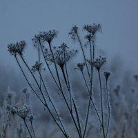 Дыхание зимы :: Алексей Щетинщиков