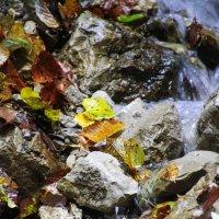 Осень :: Delete Delete