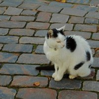 Кошка из Штаде :: Nina Yudicheva
