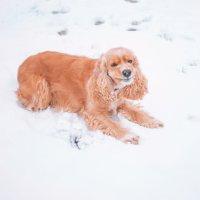 Ура!!! Снег выпал :: Наталья Петрова