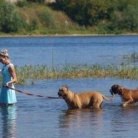 купание красных коней в реке Великой... :: Ольга ОК Попова