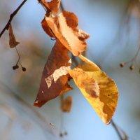 Осень прощай :: Краснов  Ю Ф