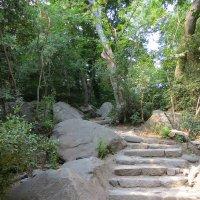 Старая лестница :: Вера Щукина
