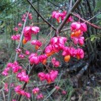Осенние цветы :: Ириша ****