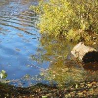 Озеро Малое Кирилловское :: alemigun