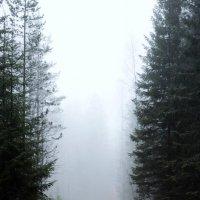 Лесная дорога :: Андрей Скорняков
