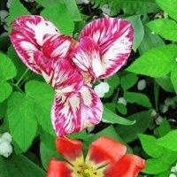 Тюльпаны весной :: Дмитрий Никитин