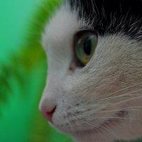 «Пристальный взгляд» :: Александр NIK-UZ