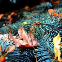«Осень» :: Александр NIK-UZ