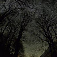 Звездные деревья :: Медведев Сергей