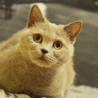 кошка Мася :: Вика К.