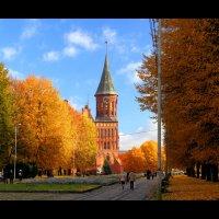 Янтарная осень :: Александр Караученко
