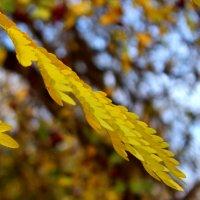 Осенняя веточка :: Светлана
