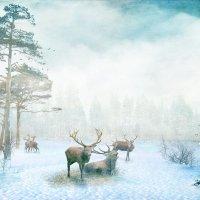 в лесу :: dex66
