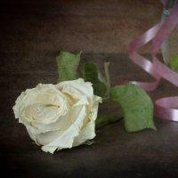 Увяла роза на столе... :: Оксана Евкодимова