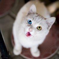 Cat :: Aizek Kaniyazoff