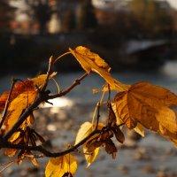 Осень :: Edward Kod