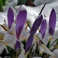 весна так начиналась :: валя