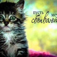 Занеси меня в телефон так: «Малышка с очаровательными, по-детски невинными глазами». :: Наталья Александрова