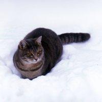 Кот занял свой любимый наблюдательный пост :: Татьяна Щёлкина
