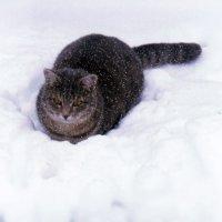 В любую погоду на посту :: Татьяна Щёлкина